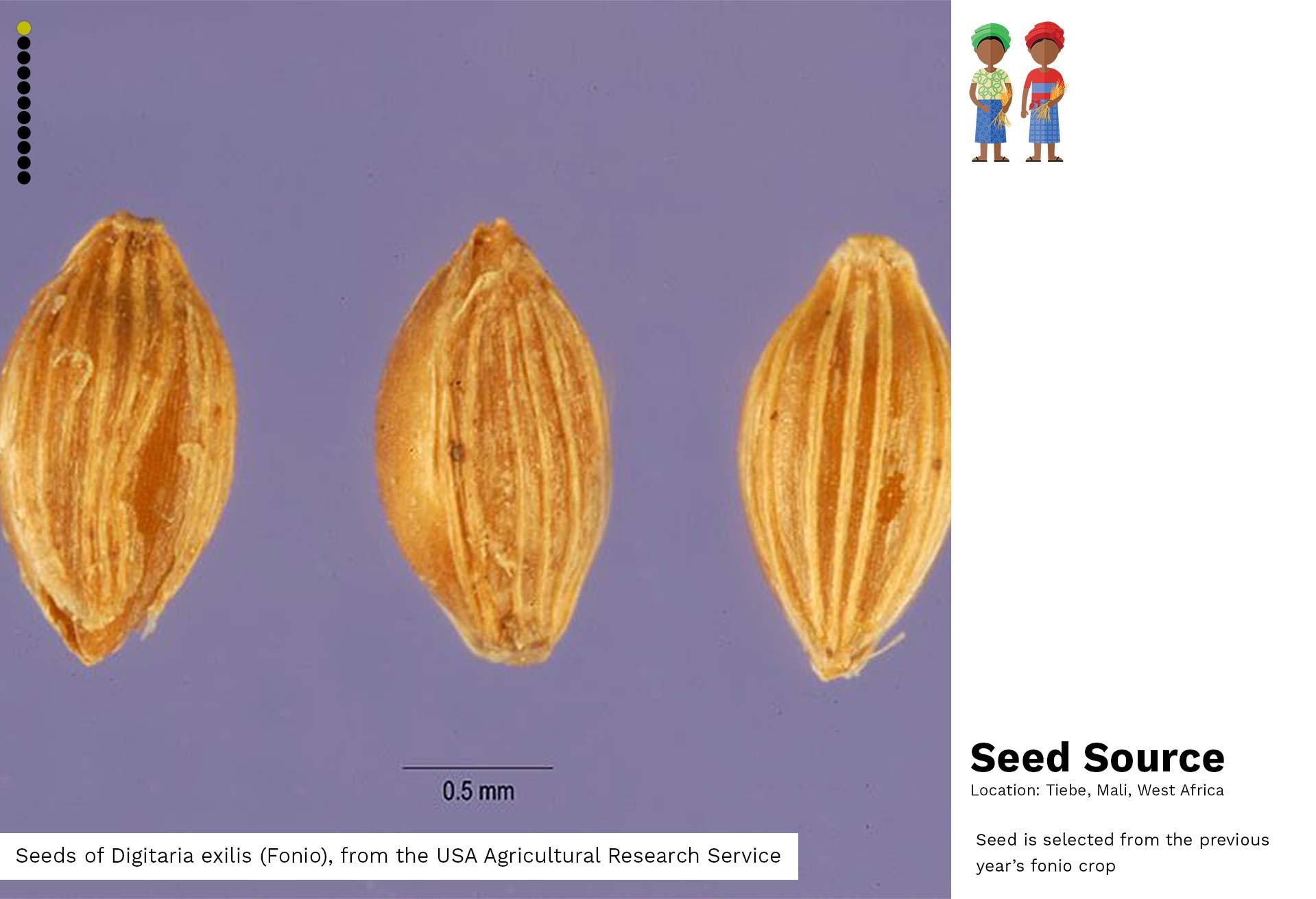 01-Seed Source