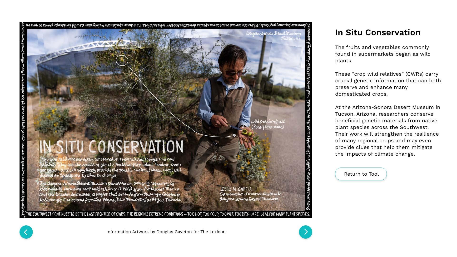 05b-In-Situ-Conservation-Artwork